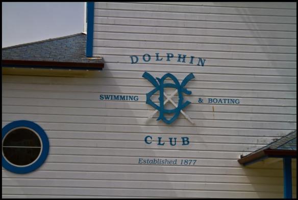 DolphinClub-1